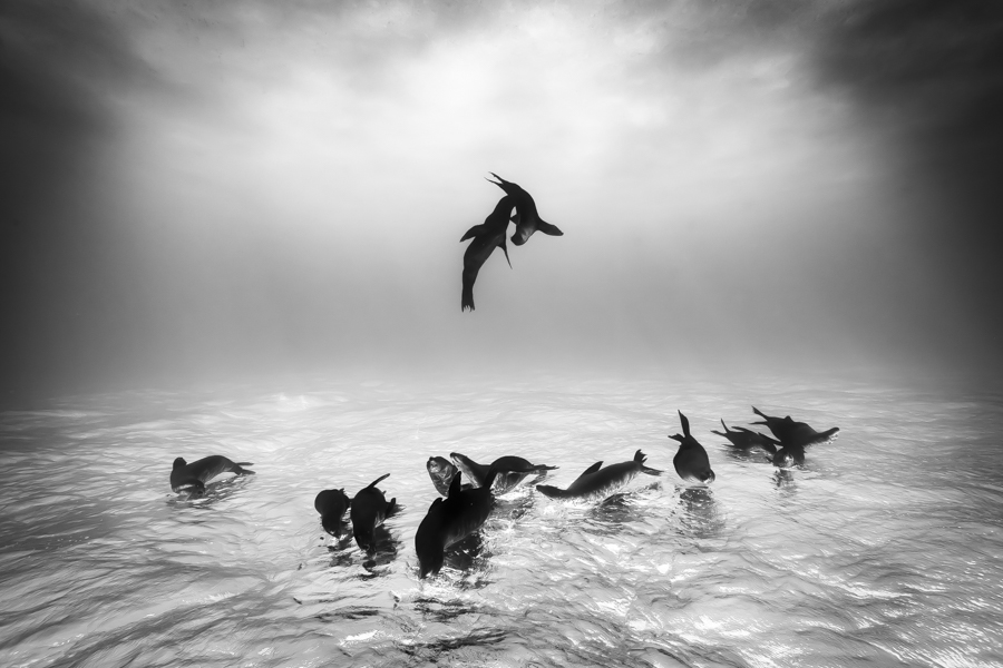Black And White Photographer Of The Year 2016