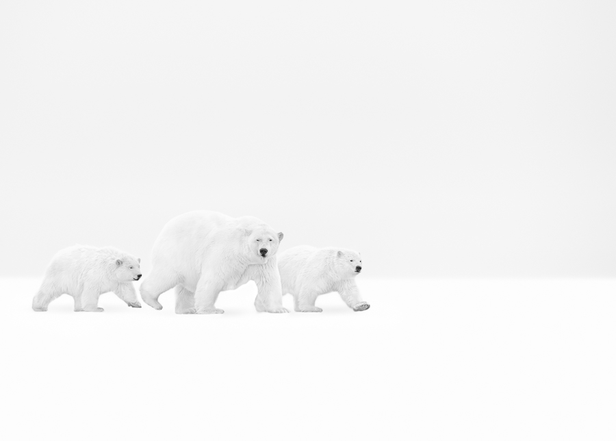 Beautiful Family in Arctic