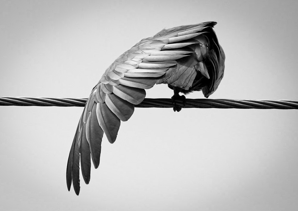 Bird on a wire,