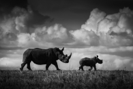 Rhinos and clouds