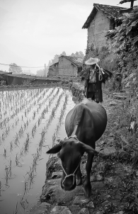 Farmers of North China