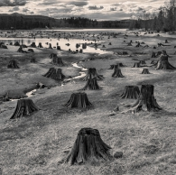 Stumps, Alder Park, Nisqually River Dam, Washington