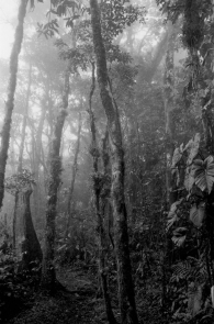 Epiphytes in the Mist